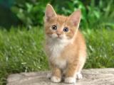 Sterilizacija in kastracija zapuščenih mačk
